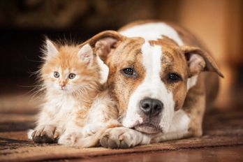 dog and a cat